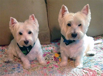 Winter and Levi  after grooming