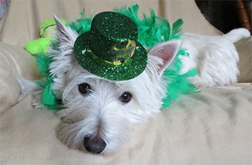 Dressed up for St. Paddy's Day