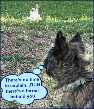 There's a terrier behind you...RUN!