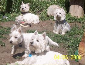 Bonnie, Jack, Joey and Lillie The LWMDs