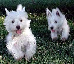 Buddy and Hailey