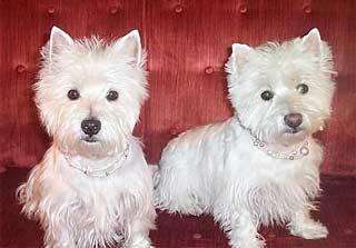 Chloe and Abbey