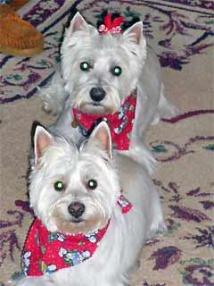 Chloe and Missy