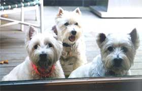 Dorrie, Corky, Magoo