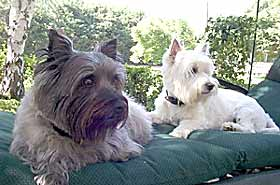 Daisy and Petunia