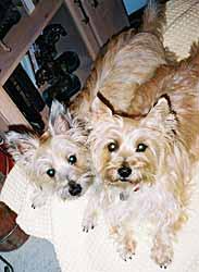 Dakota and Cheyene