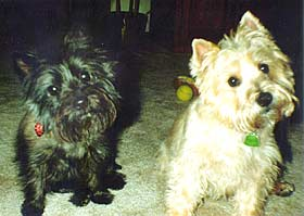 Fergie and Scruffy