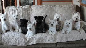 Kelsie, Samantha, Daphne, Misia, Katrina, Mickey, Nadia, Alex, DeeJay