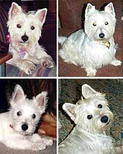 Lacey, Dixie, Daisy, Marti