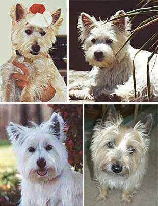 Louie, Mattie, Zoey, Ozzie
