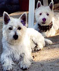 Molly Bea and Maxx