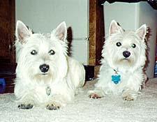 Sammy and Tuendi