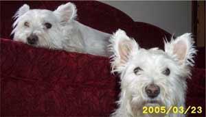 Scottie & Maestro