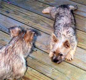 Tigger and Violet