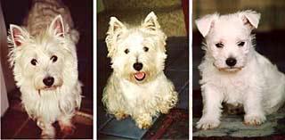 Sebastian, Malcolm, Baxter